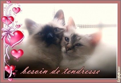 image amour chat